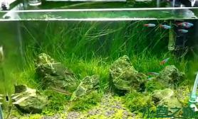 【水草造景篇】:仿别人的缸水草缸大家看像不像沉木杜鹃根青龙石水草泥