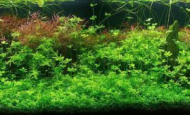 沉木青龙石水草造景150CM及以上尺寸设计16