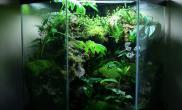 雨林水陆生态缸kevinkoltz设计