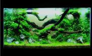 水草缸造景沉木水草泥化妆砂青龙石90CM尺寸设计50