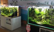 转载:泰国水草造景分享