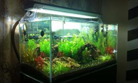新手开缸经历水草缸跟大家分享水草缸也请高手指教鱼缸水族箱