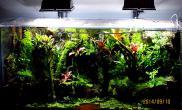 雨林水陆生态缸33