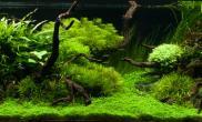 沉木青龙石水草造景150CM及以上尺寸设计23