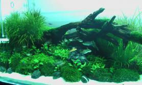 人生如一缸水草水草缸这样就好