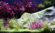水草造景秋天的童话