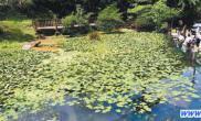台北建30公尺湿地生态教育园区(图)