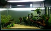 水草造景爱上水景创意空间—前路鱼缸水族箱  有点感觉了