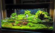 半水景矮缸水草缸植物虽多水草缸但状态一流鱼缸水族箱