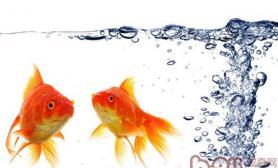 渗透压对金鱼的意义