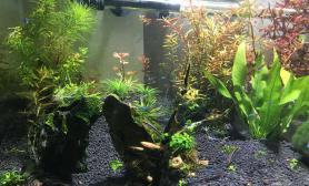 水草造景新翻缸两天就开始发小芽了