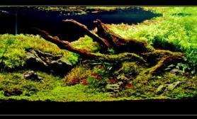 水草缸造景沉木水草泥化妆砂青龙石90CM尺寸设计60