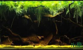原生态造景图集水草缸总有一款适合你沉木杜鹃根青龙石水草泥沉木杜鹃根青龙石水草泥沉木杜鹃根青龙石水草泥
