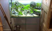 鱼缸水草造景缸的过程摆石