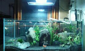 鱼缸造景开缸25天沉木杜鹃根青龙石水草泥对比图