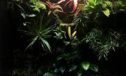 小缸雨林生态缸45CM高清图片