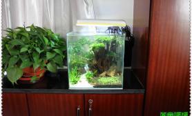 加入南美大家庭之后水草缸弄的第一个造景水草缸35方缸水草缸取名《一树苍翠》 水族箱