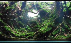 CAA 2015年IAPLC世界水草造景大赛《轮回天生》