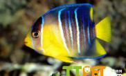 热带鱼饲养对水质有哪些要求