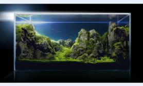绿洲水景 《唤醒》70CM超白缸