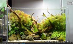 积攒半年经验水草缸临摹ADA造景60cm开缸一个半月