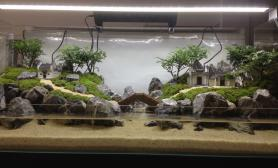 锦州简单哥的水陆缸作品欣赏