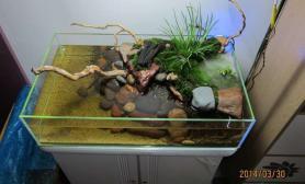 水族箱造景小清新的水陆缸