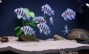 调节观赏鱼水质的要点解析