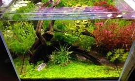 发下我的草缸近况水草缸求指导鱼缸水族箱