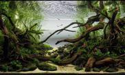 波光粼粼的背景纸哪里能有呀水草缸图片上的好漂亮沉木杜鹃根青龙石水草泥