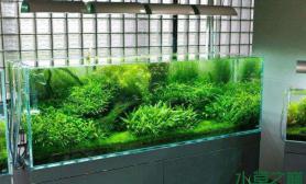 【一图流】绿意盎然水草缸生机勃勃