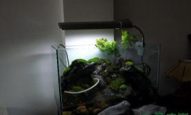 可爱的水陆缸
