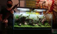 水草造景草缸改生态缸完工了沉木杜鹃根青龙石水草泥