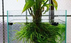 小型鱼缸水草造景