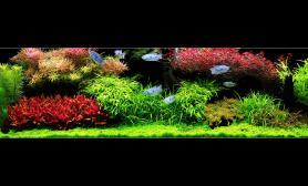Flickr高清水族造景欣赏荷兰式水草造景高清图片