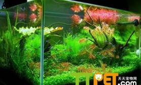 如何正确使用除藻生物