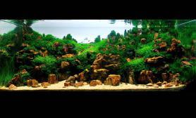 水草缸造景沉木水草泥化妆砂青龙石120CM尺寸设计41