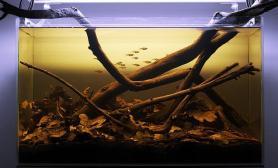造景之路水草缸造景原生态鱼缸07