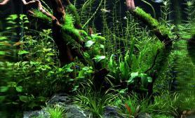 【千寻杯造景比赛+小缸组】:狂野——热带雨林