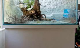 超白、水陆、方缸、原生态水草缸这个缸是真漂亮鱼缸水族箱
