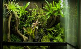 雨林水陆生态缸13