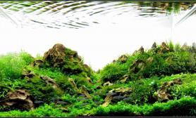 60小缸成景照水草缸上图~~