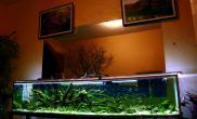 超长鱼缸造景原味野生沉木骨架设计精品欣赏作品