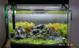 水草造景40X30小缸水草缸开缸16天水草缸红红绿绿就很美丽沉木杜鹃根青龙石水草泥