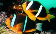 日常饲养热带鱼的误区