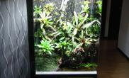 雨林水陆生态缸14