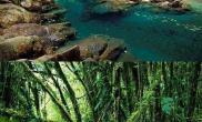[转载]水草造景素材--重走《魔戒》之路2,树人的世界。