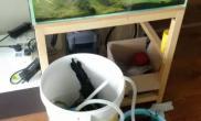 原生、阴草、虾虎、悠然自得鱼缸水族箱
