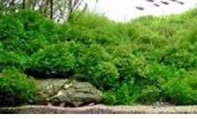 请教图中的石头上都是什么草?