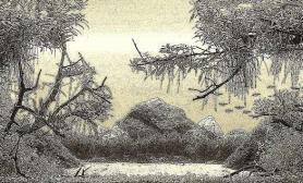 水族箱造景树林水草缸